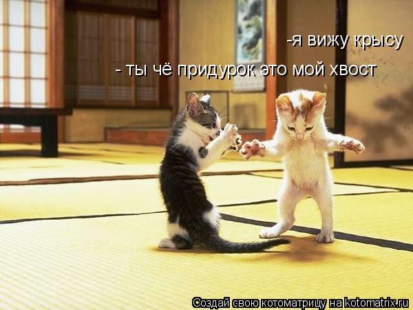 Котоматрица: -я вижу крысу - ты чё придурок это мой хвост