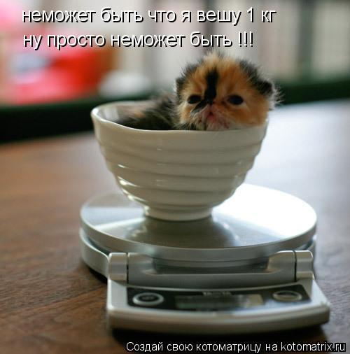 Котоматрица: неможет быть что я вешу 1 кг ну просто неможет быть !!!
