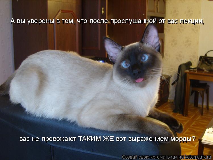 Котоматрица: А вы уверены в том, что после прослушанной от вас лекции,  вас не провожают ТАКИМ ЖЕ вот выражением морды?