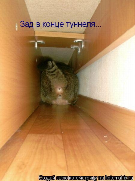 Котоматрица: Зад в конце туннеля...