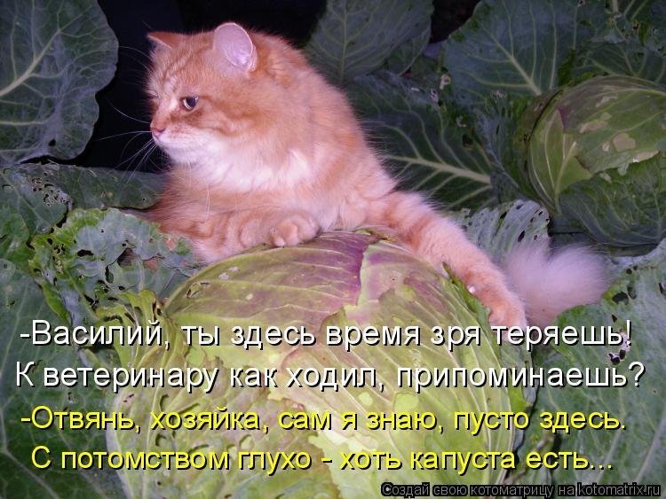 Котоматрица: -Василий, ты здесь время зря теряешь! К ветеринару как ходил, припоминаешь? -Отвянь, хозяйка, сам я знаю, пусто здесь. С потомством глухо - хоть