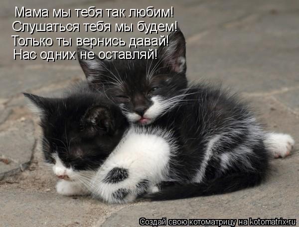 Котоматрица: Мама мы тебя так любим! Слушаться тебя мы будем ...