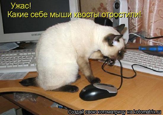 Котоматрица: Ужас! Какие себе мыши хвосты отростили!