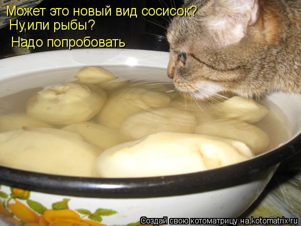 Котоматрица: Может это новый вид сосисок? Ну,или рыбы? Надо попробовать