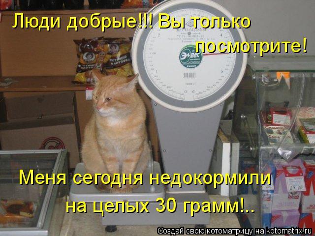Котоматрица: Люди добрые!!! Вы только посмотрите! Меня сегодня недокормили на целых 30 грамм!..