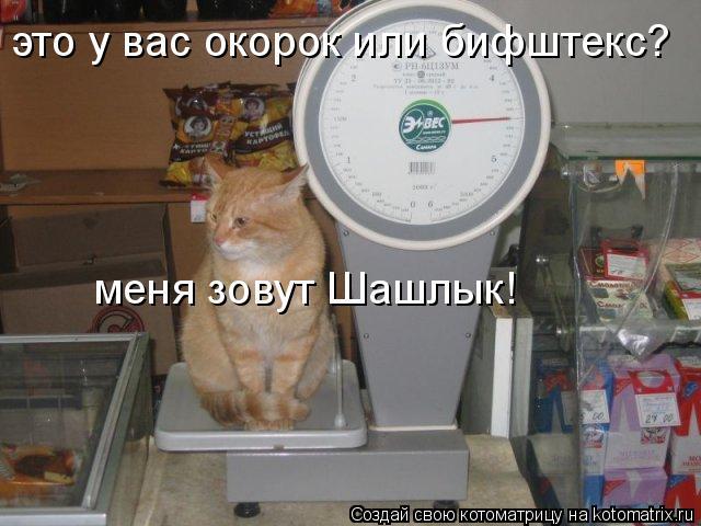 Котоматрица: это у вас окорок или бифштекс? меня зовут Шашлык!