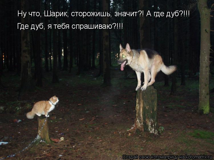 Котоматрица: Ну что, Шарик, сторожишь, значит?! А где дуб?!!! Где дуб, я тебя спрашиваю?!!!