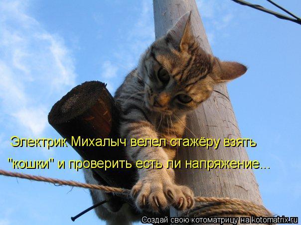 """Котоматрица: Электрик Михалыч велел стажёру взять """"кошки"""" и проверить есть ли напряжение..."""