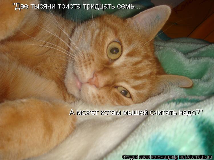 """Котоматрица: """"Две тысячи триста тридцать семь... А может котам мышей считать надо?"""""""