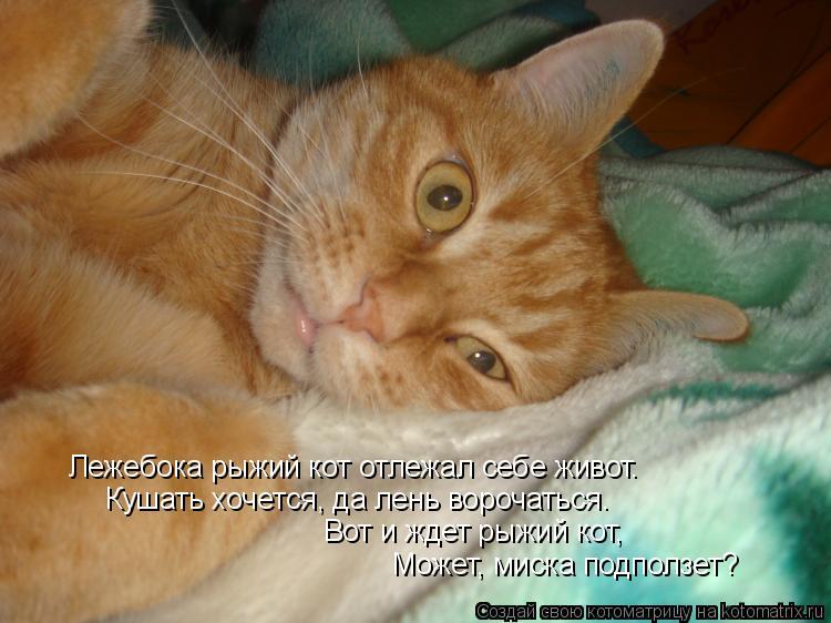 Котоматрица: Может, миска подползет? Вот и ждет рыжий кот, Кушать хочется, да лень ворочаться. Лежебока рыжий кот отлежал себе живот.