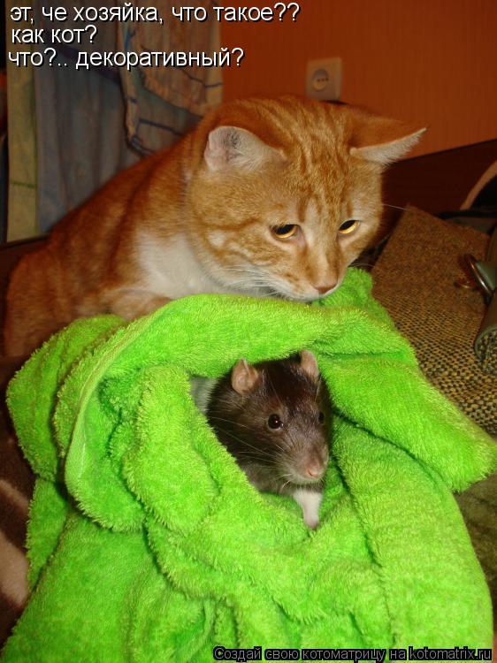 Котоматрица: эт, че хозяйка, что такое?? как кот? что?.. декоративный?