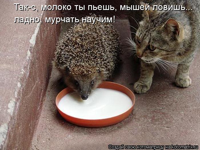 Котоматрица: Так-с, молоко ты пьешь, мышей ловишь... ладно, мурчать научим!
