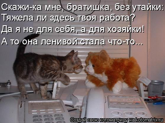 Котоматрица: Скажи-ка мне, братишка, без утайки: Тяжела ли здесь твоя работа? Да я не для себя, а для хозяйки! А то она ленивой стала что-то...