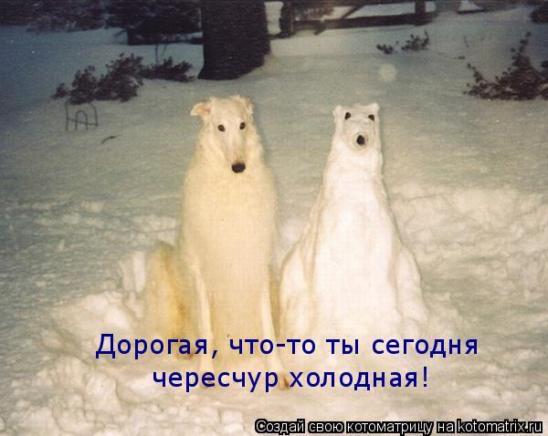 Котоматрица: Дорогая, что-то ты сегодня чересчур холодная!