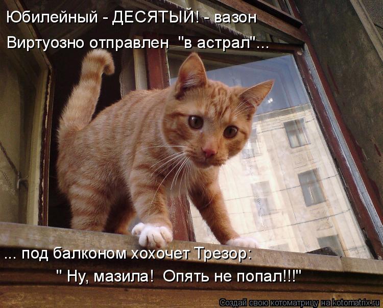 """Котоматрица: Юбилейный - ДЕСЯТЫЙ! - вазон Виртуозно отправлен  """"в астрал""""... ... под балконом хохочет Трезор: """" Ну, мазила!  Опять не попал!!!"""""""