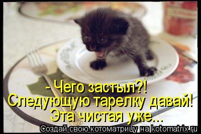 Котоматрица: - Чего застыл?! Следующую тарелку давай!  Эта чистая уже...