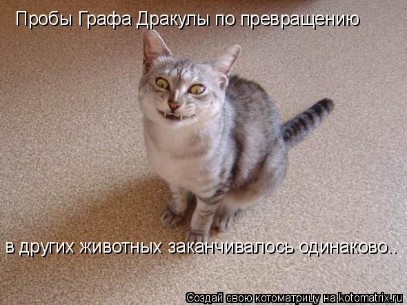 Котоматрица: в других животных заканчивалось одинаково.. Пробы Графа Дракулы по превращению