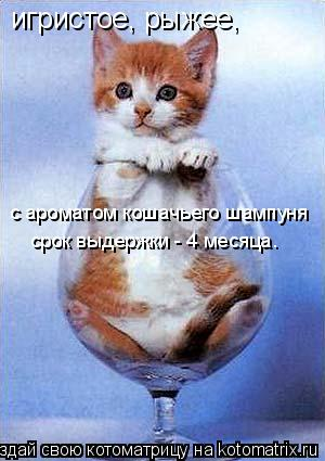 Котоматрица: игристое, рыжее,  с ароматом кошачьего шампуня срок выдержки - 4 месяца.