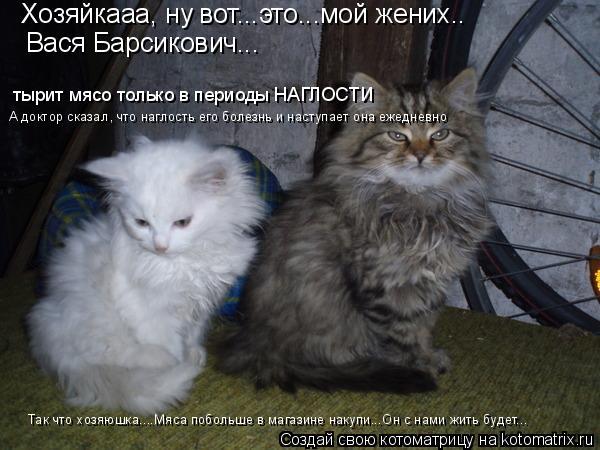 Котоматрица: Хозяйкааа, ну вот...это...мой жених..  Вася Барсикович... тырит мясо только в периоды НАГЛОСТИ А доктор сказал, что наглость его болезнь и насту