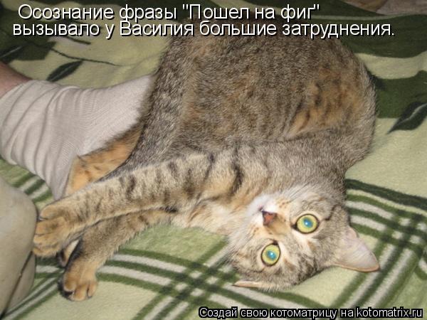 """Котоматрица: Осознание фразы """"Пошел на фиг"""" вызывало у Василия большие затруднения."""