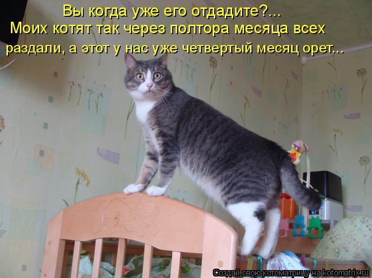 Котоматрица: Вы когда уже его отдадите?... Моих котят так через полтора месяца всех раздали, а этот у нас уже четвертый месяц орет...