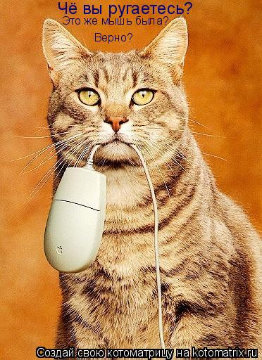 Котоматрица: Чё вы ругаетесь? Это же мышь была? Верно?