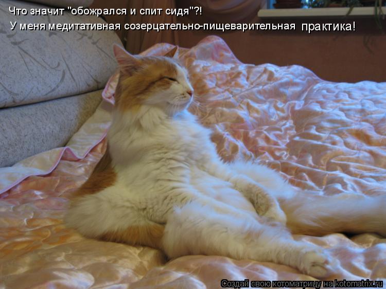"""Что значит """"обожрался и спит сидя""""?! У меня медитативная созерцательно"""