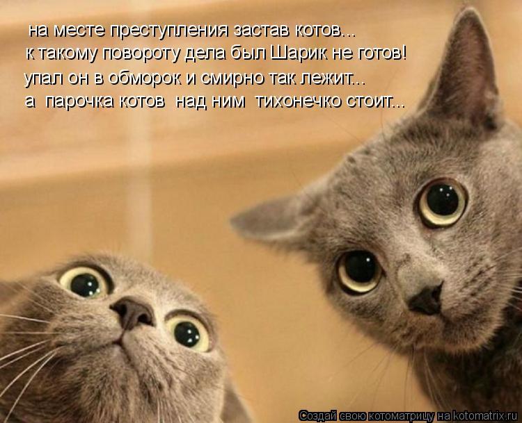 Котоматрица: на месте преступления застав котов... к такому повороту дела был Шарик не готов! упал он в обморок и смирно так лежит... а  парочка котов  над н