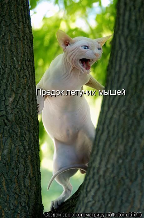 Котоматрица: Предок летучих мышей