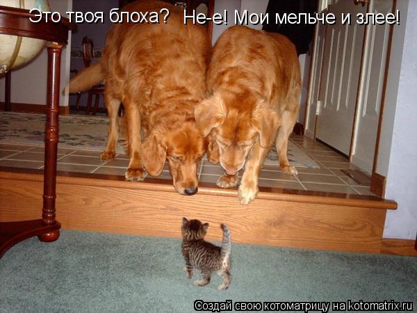 Котоматрица: Это твоя блоха? Не-е! Мои мельче и злее!