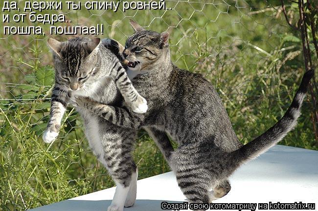 Котоматрица: да, держи ты спину ровней.. и от бедра.. пошла, пошлаа!!