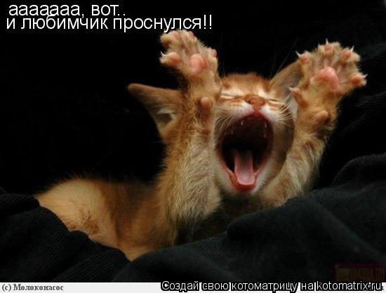 Котоматрица: ааааааа, вот.. и любимчик проснулся!!