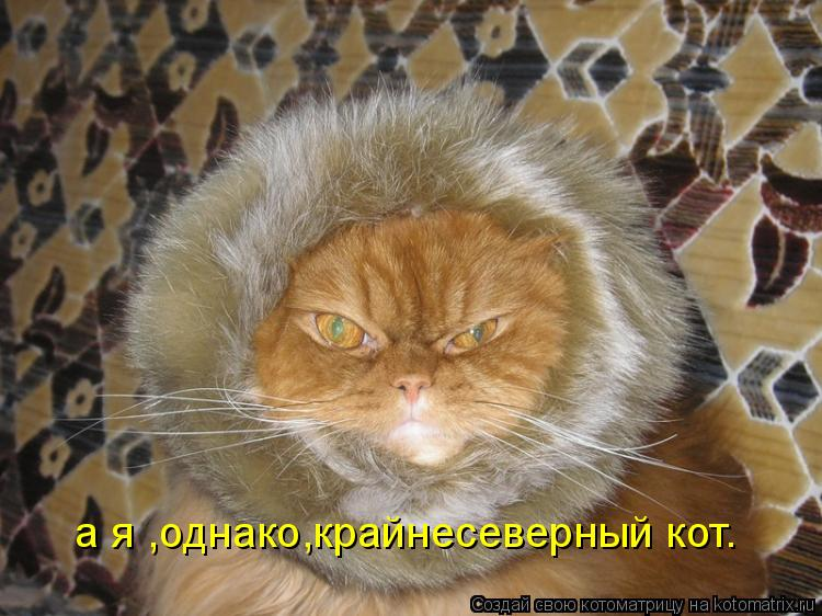 Котоматрица: а я ,однако,крайнесеверный кот.