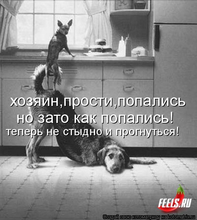 Котоматрица: хозяин,прости,попались но зато как попались! теперь не стыдно и прогнуться!