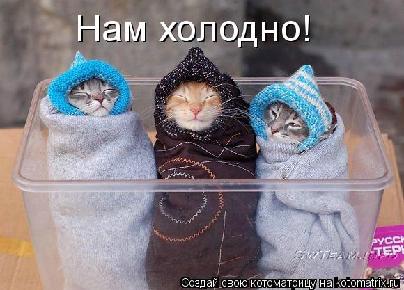Котоматрица: Нам холодно!