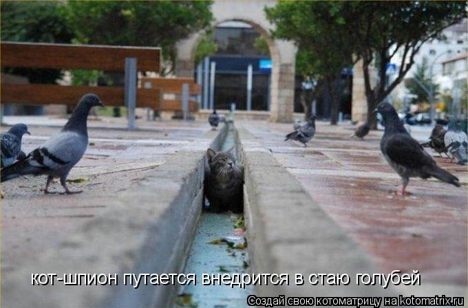 Котоматрица: кот-шпион путается внедрится в стаю голубей