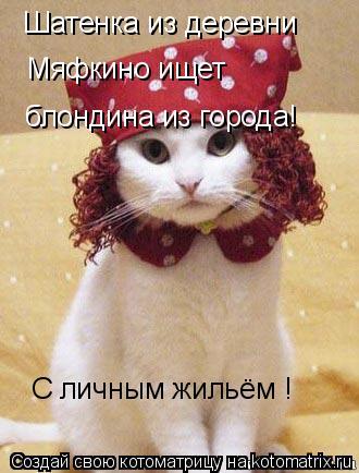 Котоматрица: Шатенка из деревни  Мяфкино ищет блондина из города! С личным жильём !