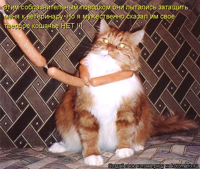 Котоматрица: Этим соблазнительным поводком они пытались затащить меня к ветеринару. Но я мужественно сказал им свое твердое кошачье НЕТ !!!