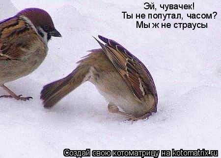 Котоматрица: Эй, чувачек!  Ты не попутал, часом? Мы ж не страусы