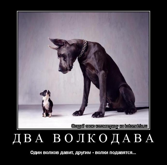 Котоматрица: Два волкодава Один волков давит, другим - волки подавятся...