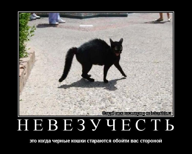 Котоматрица: НЕВЕЗУЧЕСТЬ это когда черные кошки стараются обойти вас стороной