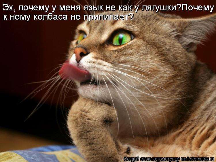 Котоматрица: к нему колбаса не прилипает? Эх, почему у меня язык не как у лягушки?Почему