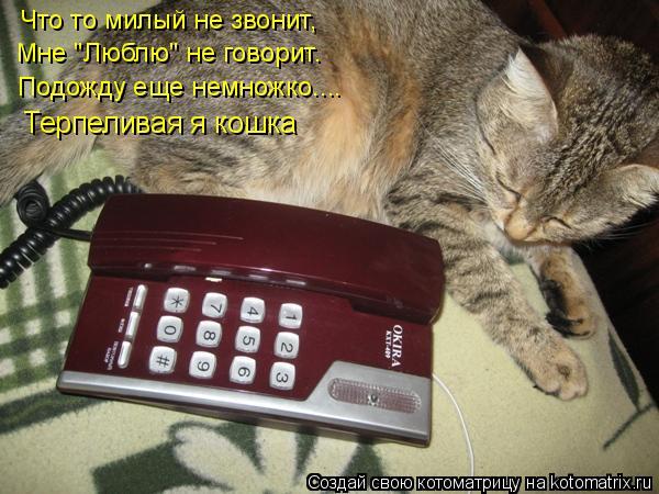 """Котоматрица: Что то милый не звонит, Мне """"Люблю"""" не говорит. Подожду еще немножко.... Терпеливая я кошка"""
