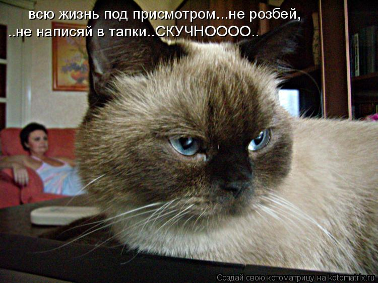 Котоматрица: всю жизнь под присмотром...не розбей,  ..не написяй в тапки..СКУЧНОООО..