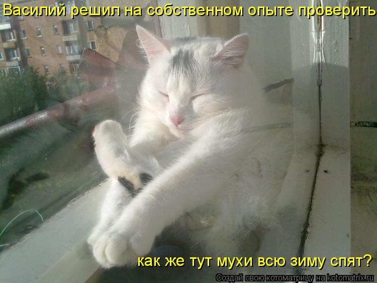 Котоматрица: Василий решил на собственном опыте проверить: как  как же тут мухи всю зиму спят?
