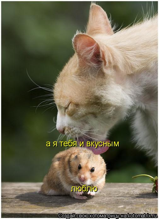 Котоматрица: а я тебя и вкусным люблю