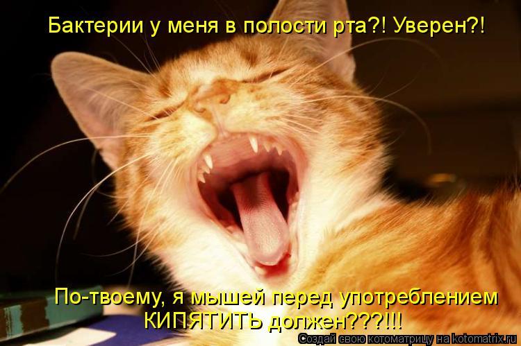 Котоматрица: Бактерии у меня в полости рта?! Уверен?! По-твоему, я мышей перед употреблением КИПЯТИТЬ должен???!!!