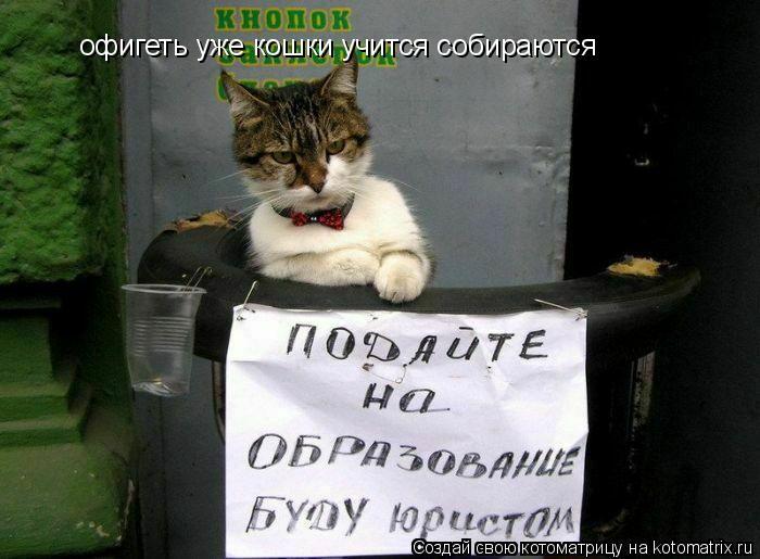 Котоматрица: офигеть уже кошки учится собираются