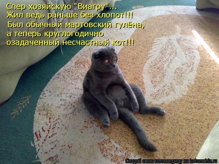 """Котоматрица: Спер хозяйскую """"Виагру""""... Жил ведь раньше без хлопот!!! Был обычный мартовский гулёна, а теперь круглогодично  озадаченный несчастный кот!!!"""