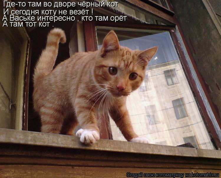 Котоматрица: Где-то там во дворе чёрный кот И сегодня коту не везёт ! А Ваське интересно , кто там орёт А там тот кот .